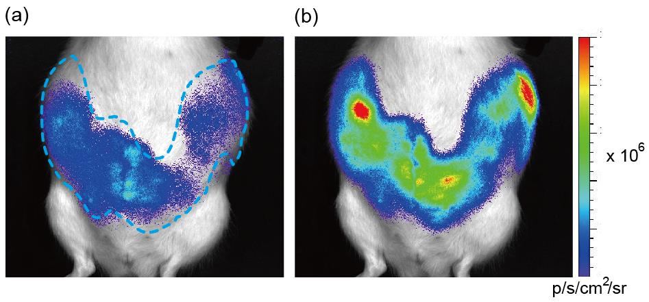 大鼠脑部结构图
